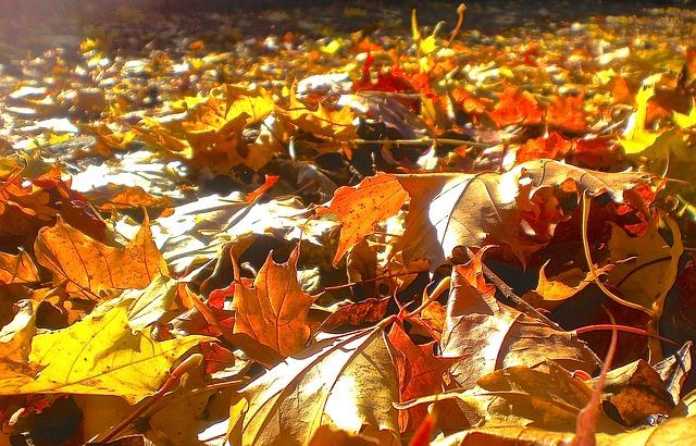 autumn-265076_640