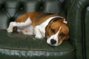 dog-190292_960_720